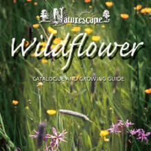 Wildflower Books & Posters