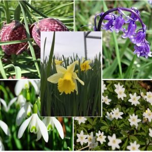 Wildflower Bulb Collections